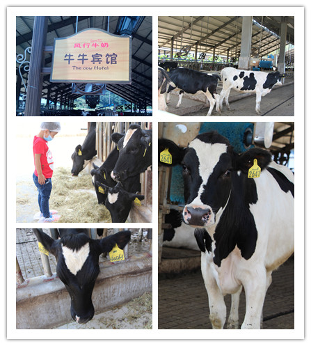 农场动物喝水图片